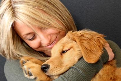 adoption-chien-adulte